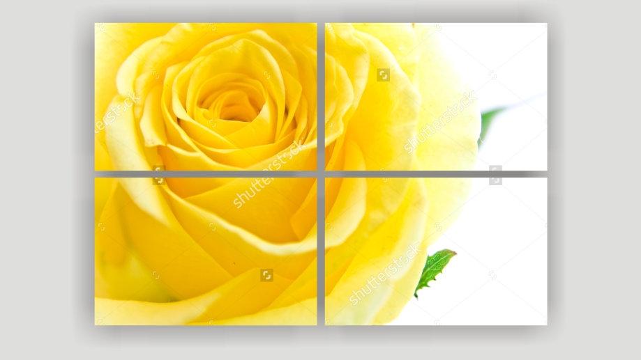 Модульная картина «Жёлтая роза»