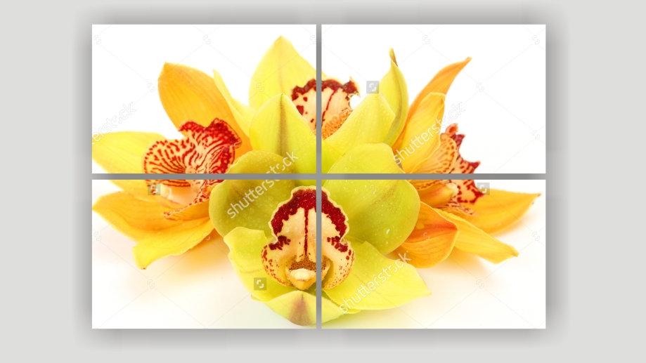 Модульная картина «Желтая Орхидея»