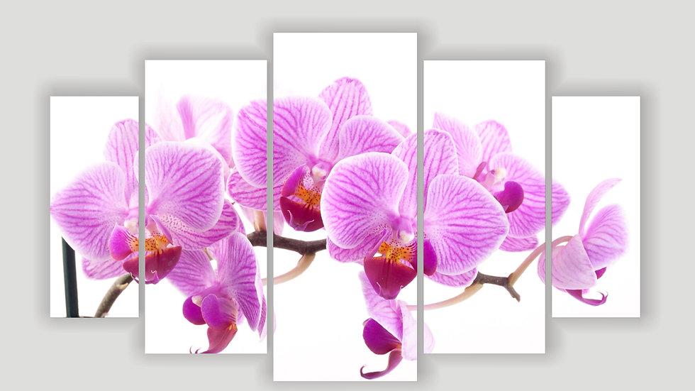 Модульная картина «Орхидея розовая»