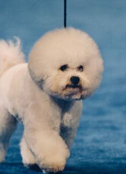 Cooper National Dog Show Oaks 111718
