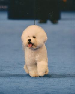 Cooper BOB National Dog Show 111718