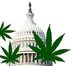 What the Marijuana Issue Is Really About