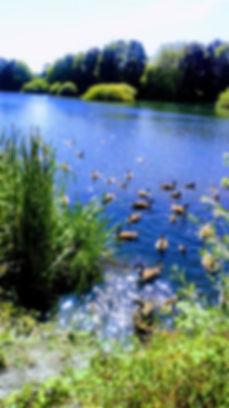 The ducks.jpg