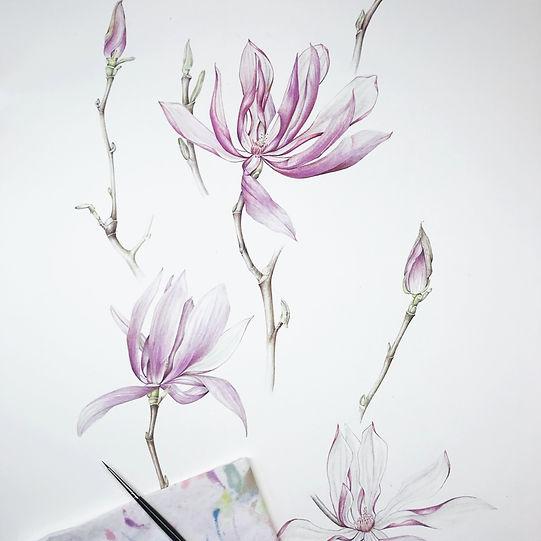 magnolia_edited.jpg