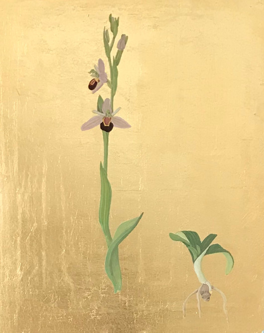 bee orchid with root.jpg