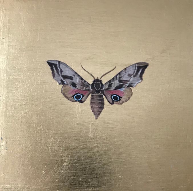 eyed hawk moth.jpg