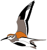 005English_Global Shorebird Counting log