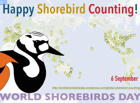 Happy World Shorebirds Day!