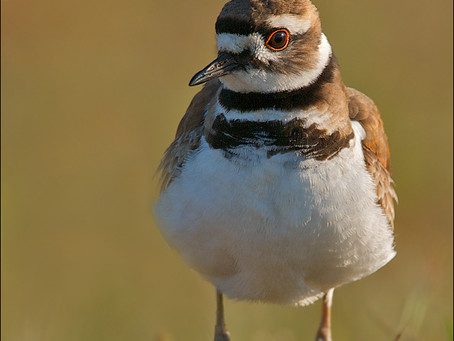 Wish List: Shorebird Photographs