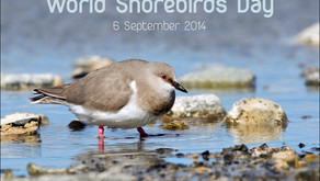 The birth of a commemorative day for shorebirds