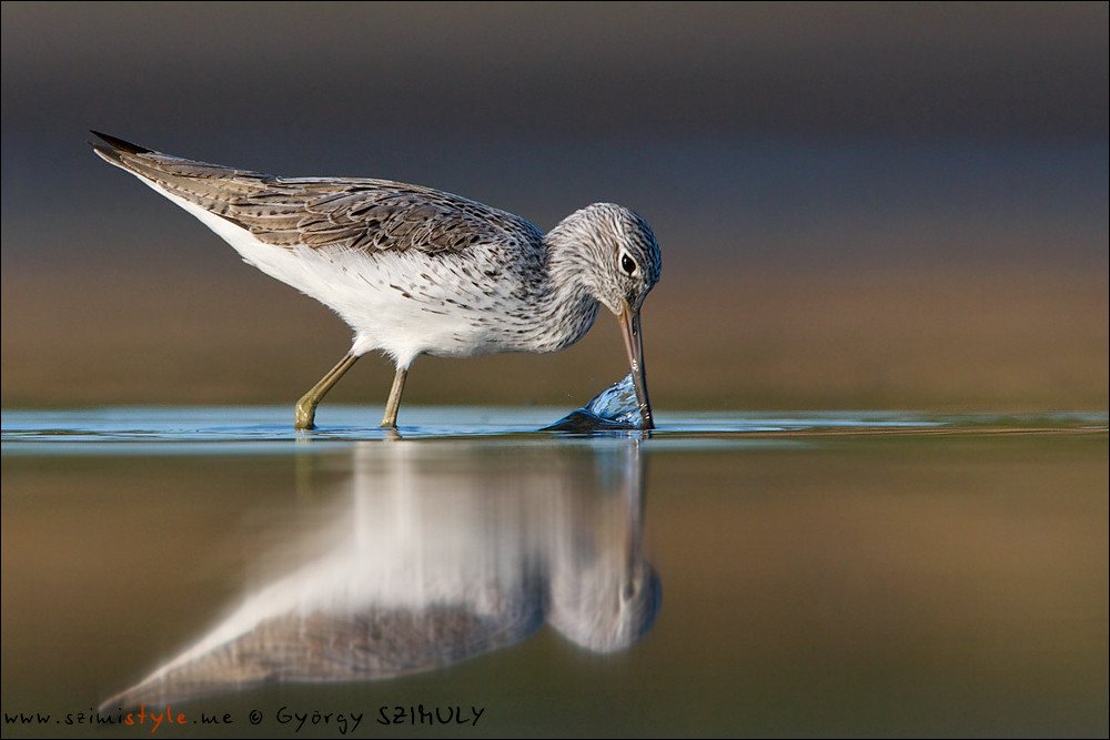 A not typically coastal migrant, the Common Greenshank. © Gyorgy Szimuly