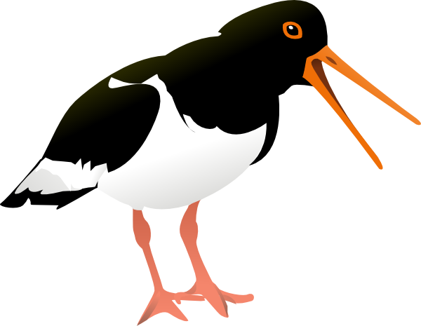 free-vector-oyster-catcher-bird-clip-art_106958_Oyster_Catcher_Bird_clip_art_hight