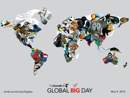 Go Shorebirding on the Global Big Day!