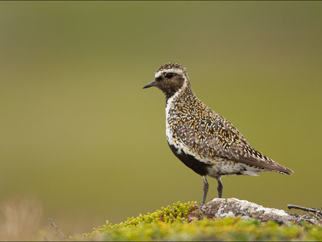 Checklist of shorebird species