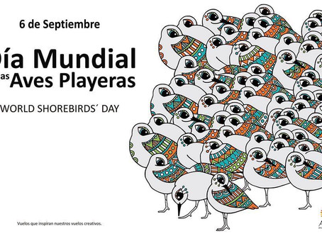 Charles Duncan about the World Shorebirds Day