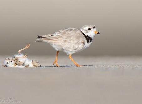 It's World Shorebirds Day…