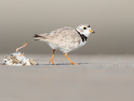It's World Shorebirds Day…