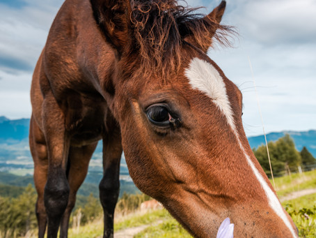 Refresh your equine parasite knowledge