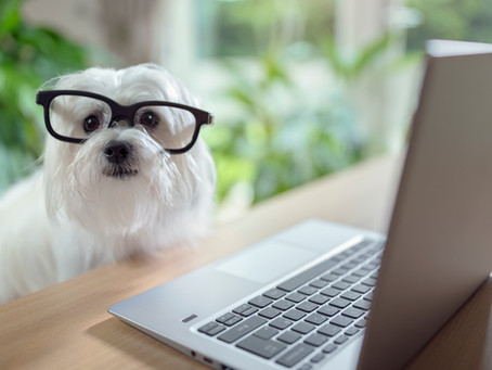 Online Pet Shops Ireland - When do I get free shipping?