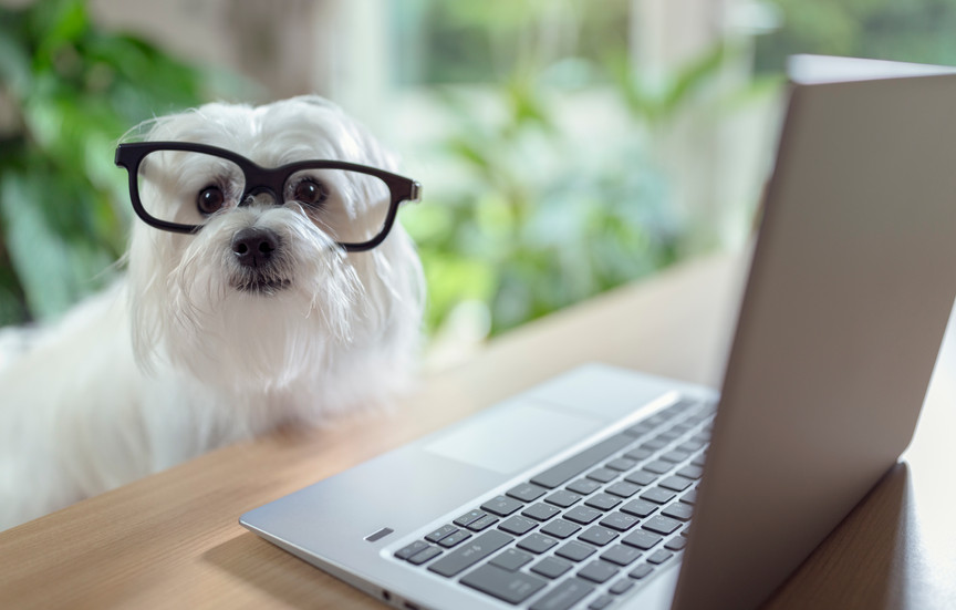 Online Pet Shops Ireland - When do I get free shipping?