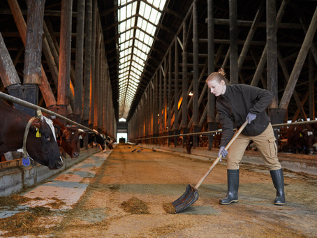 That's Gas! - The importance of gas concentration in farm buildings