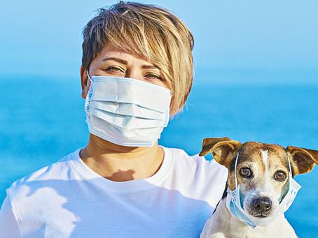 Animal disease basics - Types of disease & transmission