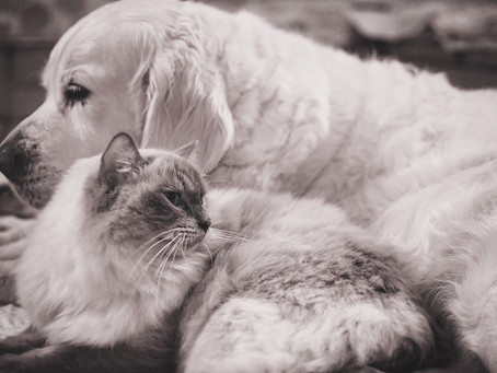 The little list of Infectious Diseases in Cats & Dogs