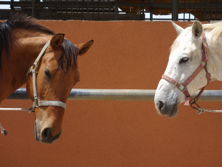 The little list of Equine infectious diseases