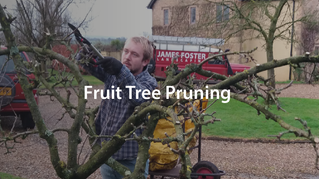 Pruning Your Apple or Pear Tree