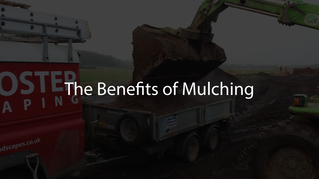The Benefits of Mulching