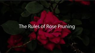The Rules of Rose Pruning