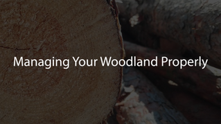 Managing Your Woodland Properly