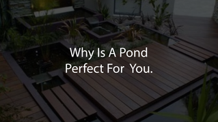 Why Is A Pond Perfect For You?