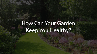 How Can Your Garden Keep You Healthy?