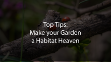 Top Tips: Make your Garden a Habitat Heaven