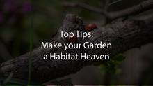 Top Tips: Make your Garden a Habitat Heaven