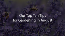 Our Ten Tips For Gardening In August