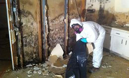 Toronto Mold Removal and Mold Remediation