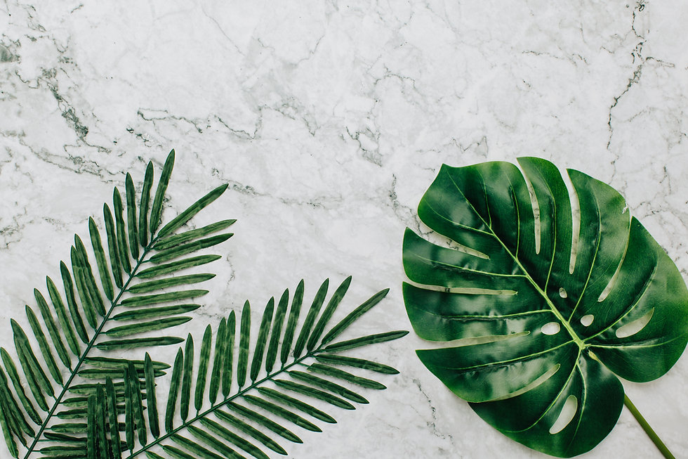 tropical-plants-marble-background.jpg