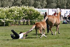 מנהל מנהיגות ניהול סדנא סדנאות סוס סוסים סדנאות מנהלים