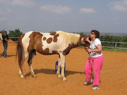 סדנאות מנהלים סוסים מנהיגות ניהול