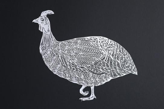 Guinnea Fowl
