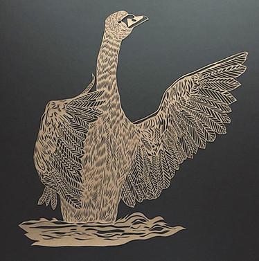Swan - Open wings