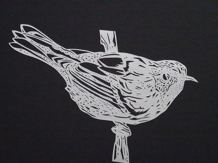 Warbler #1