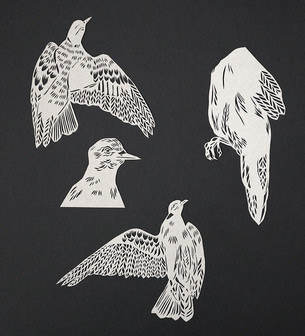 Pigeon study
