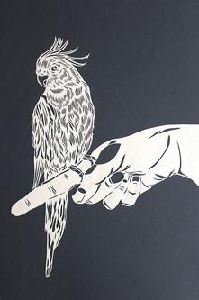 Bird on hand - Parakeet