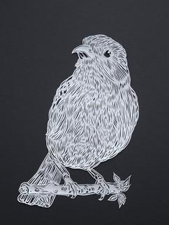 Warbler #2