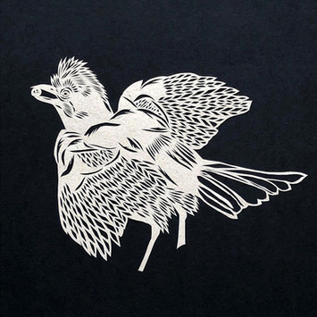 Eurasian Jay