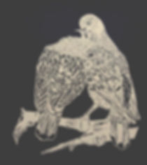 Dove_pair#2-November-2016.jpg