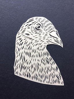 Pigeon - profile